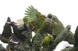 37 -  Canada – Montréal – L'arbre aux oiseaux - 4