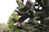 37 -  Canada – Montréal – L'arbre aux oiseaux - 5