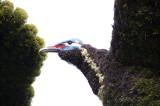 37 -  Canada – Montréal – L'arbre aux oiseaux - 15