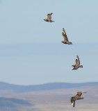 Vogels-Birds
