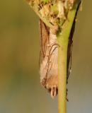 Vlinders-Butterfly
