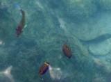 Weird and wonderful fish 1