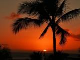 The obligatory cliché palm tree and sunset shot