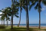 Posing by a palm tree (Waikiki beach)