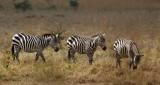 Nariobi National Park and surrounding area