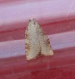 unknown_moths