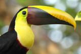 Birds - Alphabetic Order