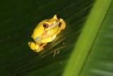 Amfibiën - Reptielen / Amphibians - Reptiles