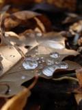 Rain Seeds