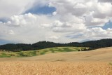 Pea Harvest on the Palouse