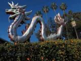 Lotus Festival Dragon