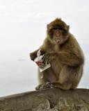 Apes Like Yogurt Too!