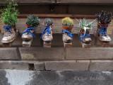 Storefront Cactus Display