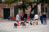 Dog Walkers in Venice