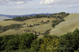 Winding Cypress Road in Val d' Orcia