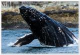 Juneau Impressions