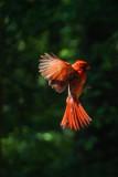 penna_birds