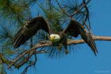 fla_birds