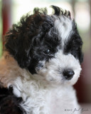 Puppies 7.2013