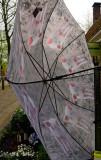 Piggy umbrella