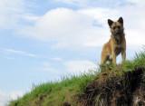 2015_02_16 Animals Encountered on Otto's Walk