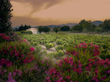 Flowers at sunset over Grimaud Castle