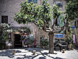Shop Courtyard and Plane Tree