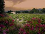 Flower sunset over Grimaud Castle