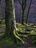 Moss and Trees, Grasmere