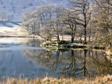 Winter Trees, Rydal