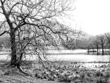 Rydal Winter