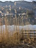 Rydal, Lakeside reeds