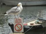 What notice!