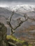 Lone Tree on cliff edge