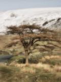 Tree at Kirkstone Pass