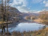 Sheep by lake