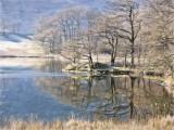 Frosty lake side - Rydal
