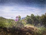La Grande Tete - Cap Canaille cliffs - La Ciotat