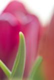 Ballet des Fleurs No 4