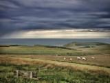 Sheep at Beachy Head
