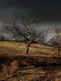 Tree before the storm