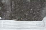 More Snow Than Pond