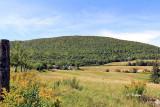 Hills of Maple