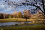 L'étang du parc - A pond in the park