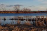 Fin du jour sur l'étang - Sunset on the pond