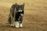 Chatte et son petit - Mom and her kitten