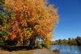 L'automne dans toute sa splendeur - Amazing fall colors