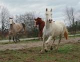 A few horse photo's