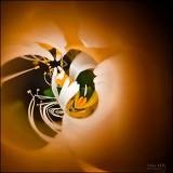 08-Hummingbird'sView.jpg