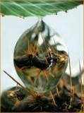 11Cactus Droplet -.JPG